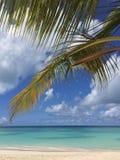 Tropikalny krajobraz Fotografia Stock