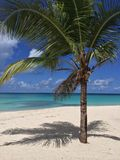 Tropikalny krajobraz Obrazy Stock