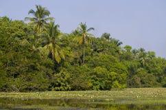 Tropikalny krajobraz drzewka palmowe i rośliny blisko jeziora z lelujami Obrazy Stock