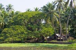 Tropikalny krajobraz drzewka palmowe i rośliny blisko jeziora z lelujami Zdjęcia Royalty Free
