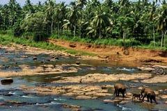 Tropikalny krajobraz szeroka dżungla drzewka palmowe i rzeka Zdjęcie Royalty Free