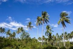Tropikalny krajobraz z coco drzewkami palmowymi Egzotyczny miejsce widok przez drzewko palmowe sylwetek Fotografia Stock