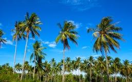 Tropikalny krajobraz z coco drzewkami palmowymi Egzotyczny miejsce widok z drzewko palmowe sylwetkami Zdjęcia Royalty Free