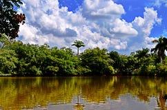 Tropikalny krajobraz z drzewami, jeziorem, niebieskim niebem z biel chmurami i odbiciem w wodzie, Fotografia Royalty Free