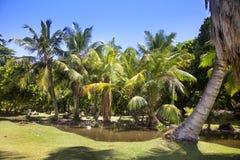 Tropikalny krajobraz z drzewkami palmowymi Zdjęcia Royalty Free