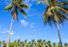 Tropikalny krajobraz z niebieskiego nieba i coco drzewkami palmowymi Egzotyczny miejsce widok przez drzewko palmowe sylwetek Obrazy Royalty Free