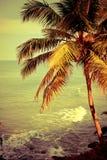 Tropikalny krajobraz z oceanu drzewkiem palmowym i plażą Fotografia Royalty Free