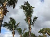 tropikalny krajobrazu Zdjęcia Stock