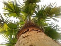 tropikalny krajobrazu zdjęcie royalty free