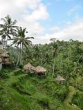 tropikalny krajobrazu Fotografia Stock
