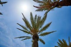 tropikalny krajobrazu Zdjęcia Royalty Free