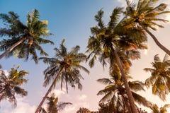 tropikalny krajobrazu Obrazy Royalty Free
