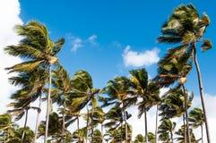 tropikalny krajobrazu Obraz Royalty Free