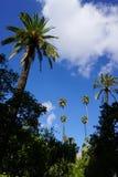 tropikalny krajobrazu zdjęcie stock