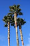 tropikalny krajobrazu Obraz Stock