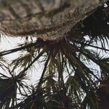 tropikalny krajobrazu Fotografia Royalty Free