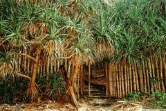 tropikalny krajobrazu Piękna zielona kokosowych palm plantacja zdjęcie stock