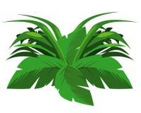 tropikalny krzaka Obraz Royalty Free