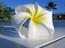 tropikalny kwiat zdjęcie stock