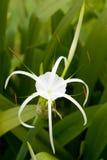tropikalny kwiat Obraz Stock