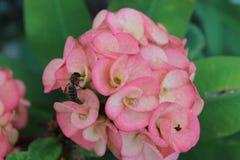 Tropikalny kwiat i pszczoła fotografia royalty free