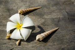 Tropikalny kwiat i skorupy obrazy stock