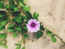 Tropikalny kwiat przy plażą Zdjęcie Royalty Free