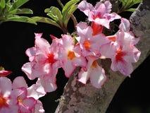 Tropikalny kwiat s Zdjęcie Royalty Free