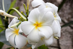 Tropikalny kwiat w bor borach Zdjęcie Stock