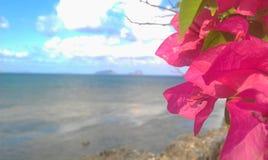Tropikalny kwiat z jaskrawym kolorem Fotografia Stock
