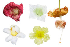 Tropikalny kwiatu set Obraz Stock