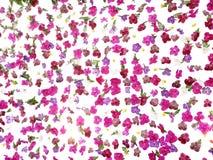 Tropikalny kwiecisty deseniowy ślubny tło, piękna Vanda orchidea Obraz Stock