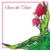 Tropikalny Kwiecisty Etligera kwiatu karty szablon Fotografia Stock