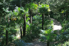 Tropikalny las Fotografia Royalty Free