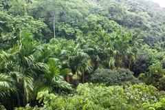 Tropikalny las Obrazy Royalty Free