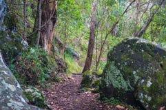 Tropikalny las deszczowy ścieżka Wycieczkować w tropikalnym lesie tropikalnym Obraz Stock