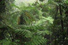 Tropikalny las deszczowy Zdjęcie Royalty Free