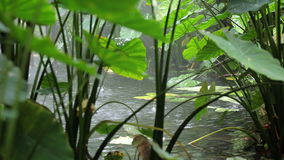 Tropikalny las deszczowy zbiory wideo