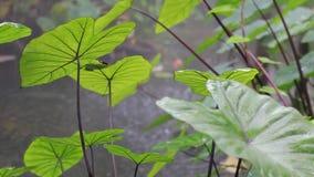 Tropikalny las deszczowy zbiory