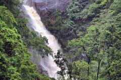 Tropikalny las deszczowy obraz royalty free