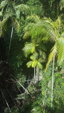 Tropikalny las deszczowy Fotografia Royalty Free