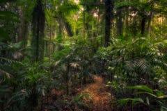 Tropikalny las deszczowy Zdjęcie Stock