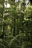 tropikalny las deszczowy zdjęcia stock