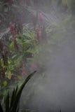 Tropikalny las deszczowy atmosfera Obraz Royalty Free