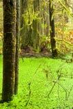 Tropikalny las deszczowy bagna wildernis zachodnie wybrzeże BC Zdjęcia Stock