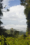 Tropikalny las deszczowy Francuski Guiana Zdjęcia Stock
