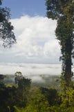 Tropikalny las deszczowy Francuski Guiana Obrazy Stock
