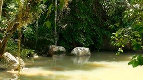 Tropikalny las deszczowy i rzeka z skałami Dzika roślinność, głęboka tropikalna lasowa dżungla z drzewami nad szybkim skalistym b zbiory wideo