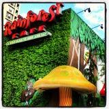 Tropikalny las deszczowy kawiarnia Zdjęcia Royalty Free