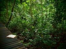 tropikalny las deszczowy książkowy ślad Zdjęcia Royalty Free